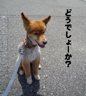 デジカメ7.jpg