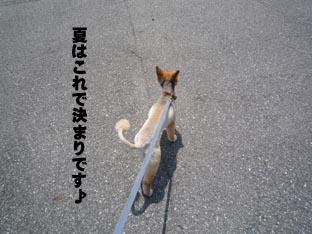 デジカメ9.jpg